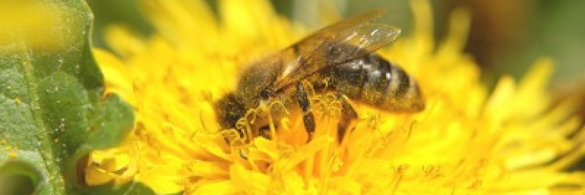 hogyan lehet a vállízületet méhcsípéssel kezelni