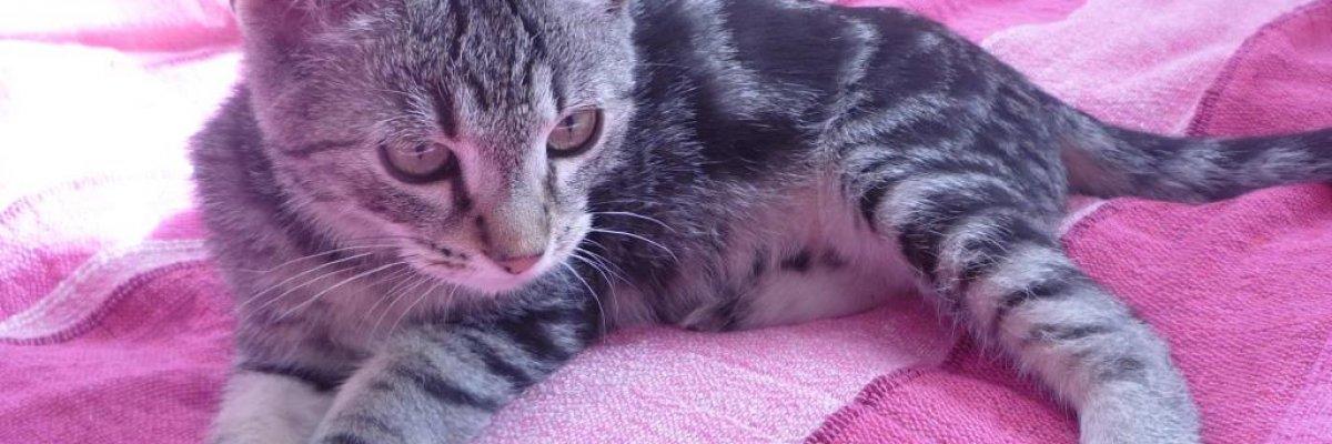 Az allergén immunterápiának köszönheti, hogy nem kell megválnia cicájától