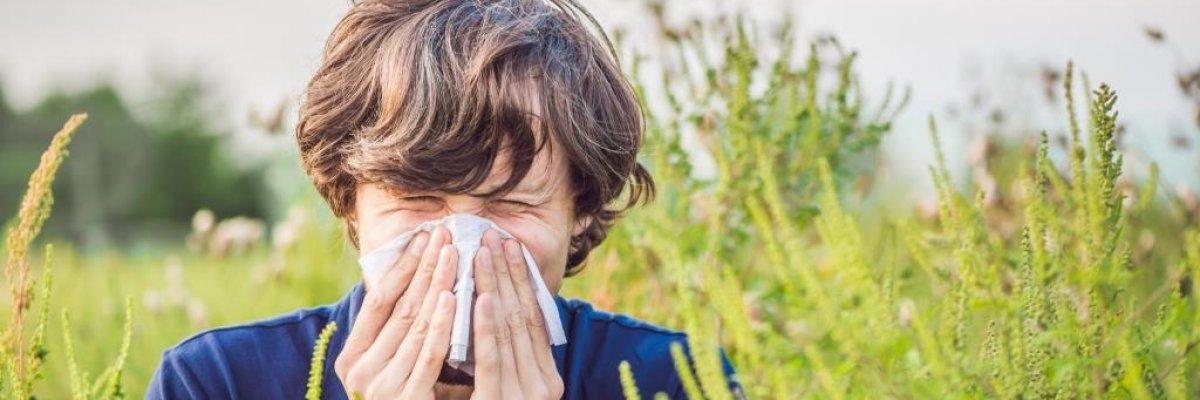 A parlagfű allergia tünetei