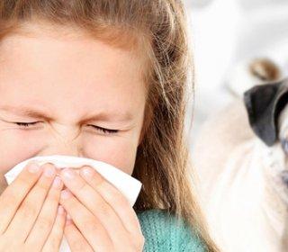 Kutyaallergia, macskaallergia