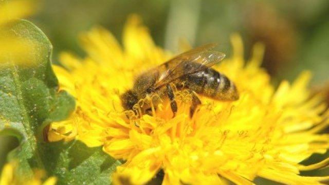 5 kérdés a méh- és darázsméreg allergiáról