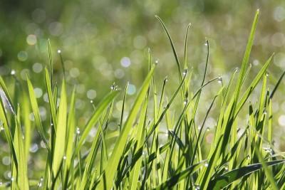 A pázsitfűfélékre allergiások már most gondoljanak a kezelésre!