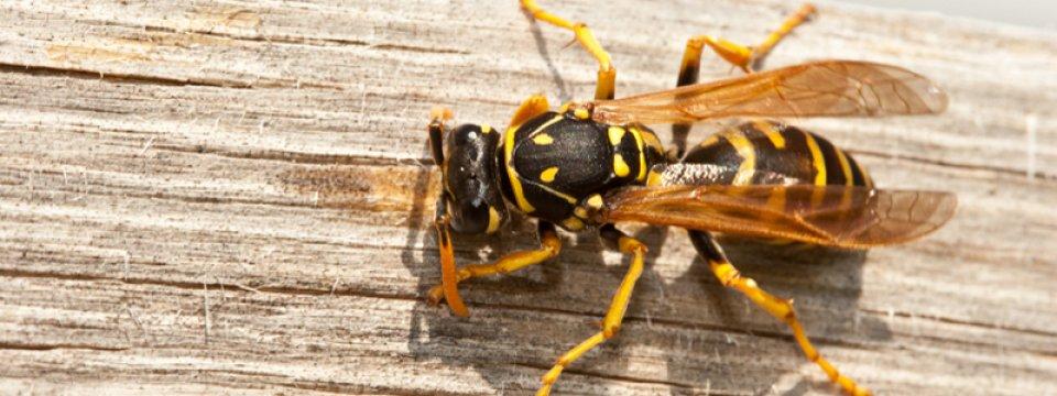 Méh-és darázscsípés allergia